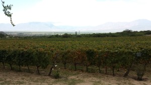 rsz_vineyards